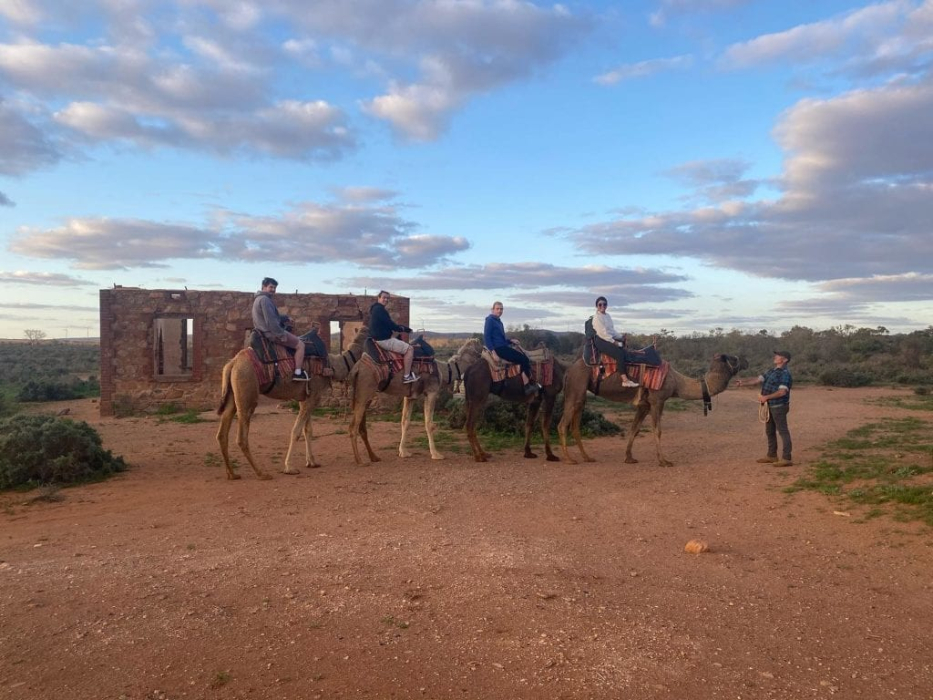 Outback Camel rides