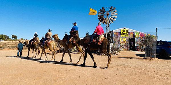 1 Hour Camel Tour