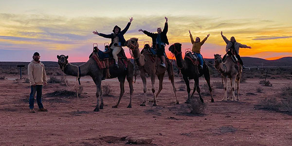Sunset Camel Tours Silverton