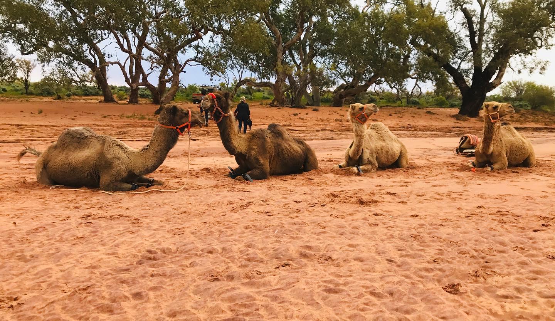 Overnight Camel Tour