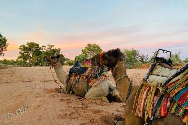 Overnight Camel Trekking in Australia
