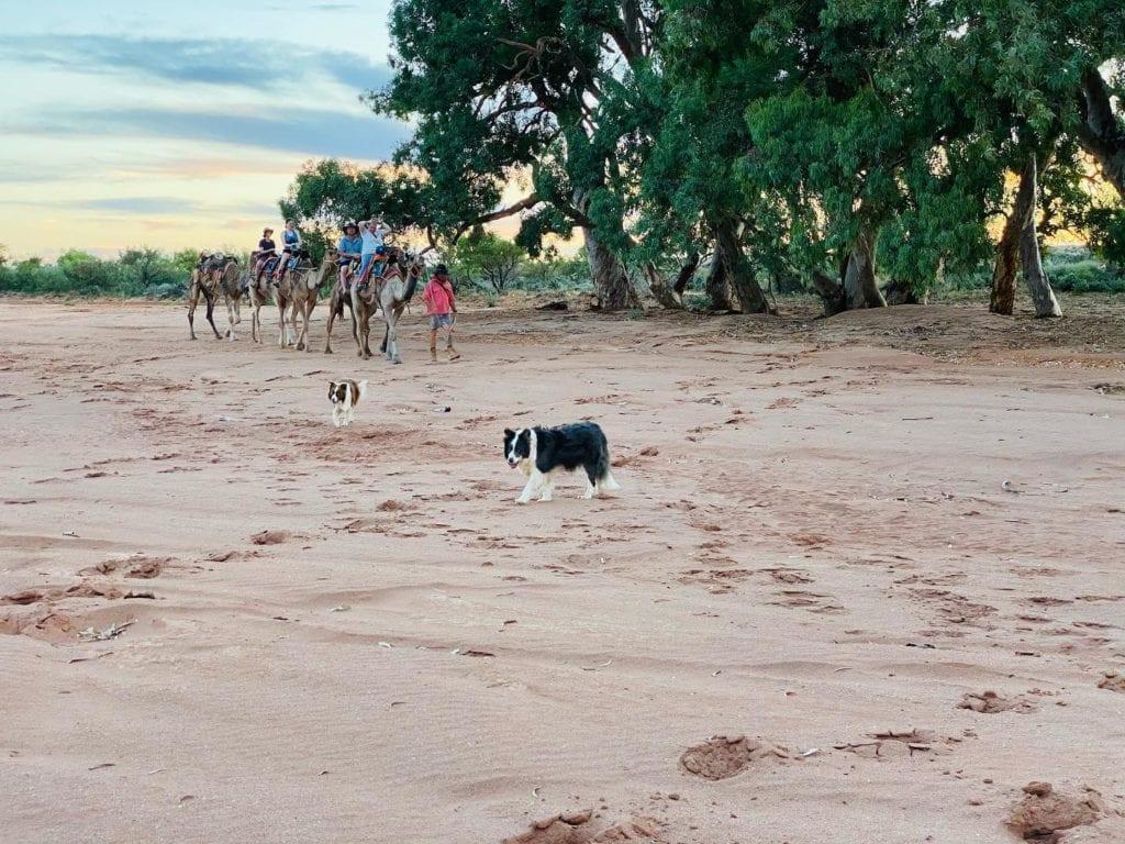 Overnight Camel Trek Campsite