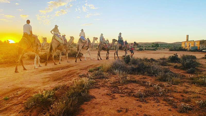 Outback Camel Ride