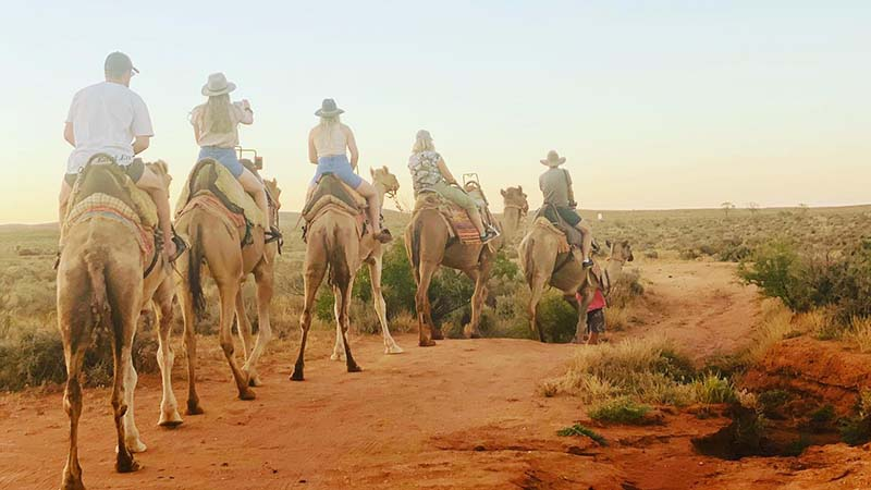 Outback Camel Tours