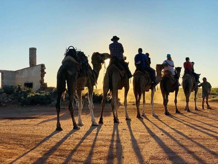 Camel Shadows during sunset camel ride